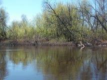 De mening van struiken en zijn gedachtengang in de bosrivier stock afbeelding