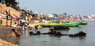De mening van Varanasi met boten, buffels en ghats met volkeren baadt in heilige Ganga-Rivier Royalty-vrije Stock Foto