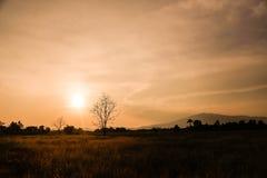 De mening van Zonsondergang Stock Afbeeldingen