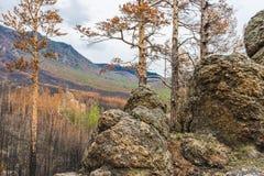 De mening vanaf de bovenkant van de heuvel op gebrande taiga Royalty-vrije Stock Foto's
