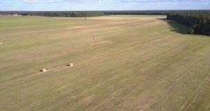 De menings landelijk landschap van het vogeloog met strobroodjes op gebied stock videobeelden