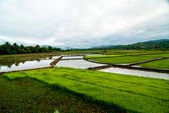 De menings natuurlijke achtergrond van de padieveldherfst Stock Foto