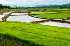 De menings natuurlijke achtergrond van de padieveldherfst Stock Afbeelding