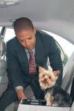 De mens bindt Hond in Auto vast Stock Foto