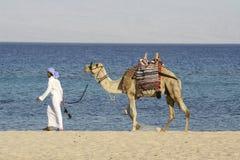 De mens die van de kameel rode overzees loopt Stock Fotografie