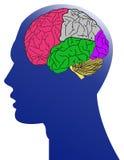 De mens en de hersenen Stock Afbeeldingen