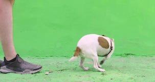 De mens geeft een bevel aan hond tijdens gang stock footage