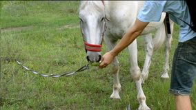 De mens geeft een paardgras van zijn handen, maar zij wil niet het eten stock videobeelden