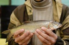 De mens houdt gevangen vissen in zijn handen royalty-vrije stock fotografie
