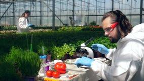 De mens kijkt door een microscoop terwijl het controleren van tomaten stock video