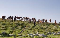 De mens leidt paarden stock foto