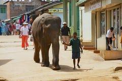 De mens loopt een volwassen olifant door de straat in Pinnawala, Sri Lanka Stock Fotografie