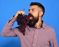 De mens met baard geniet van zijn bos van druiven op blauw stock afbeeldingen
