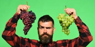 De mens met baard houdt bossen van druiven op groene achtergrond stock afbeelding