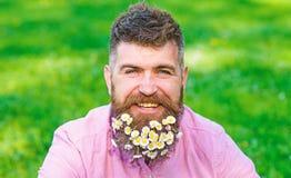 De mens met baard op gelukkig gezicht geniet van het leven in ecologic milieu Hipster met madeliefjes kijkt gelukkig Gebaarde men royalty-vrije stock afbeelding