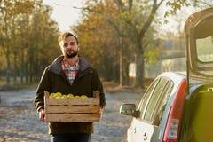De mens met houten doos van gele rijpe gouden appelen bij het boomgaardlandbouwbedrijf laadt het aan zijn autoboomstam Kweker het royalty-vrije stock foto