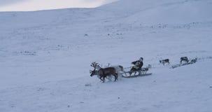 De mens op een ar heeft een rit met een groep met rendieren in het midden van het Noordpoolgebied die het video vangen van het Si stock videobeelden