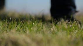 De mens plaatst een golfbal op gazon dichte omhooggaand stock videobeelden