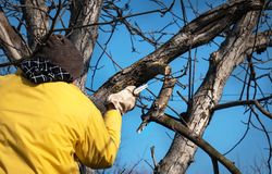 De mens snijdt bomen met een zaag in de tuin Het werk in de tuin stock afbeelding