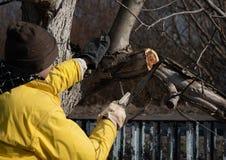 De mens snijdt bomen met een zaag in de tuin Het werk in de tuin royalty-vrije stock afbeelding