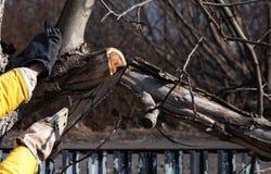 De mens snijdt bomen met een zaag in de tuin Het werk in de tuin stock foto's