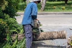 De mens snijdt bomen vellenboom met Kettingzaag Het beroep sneed boom royalty-vrije stock afbeeldingen