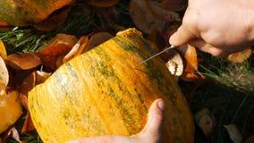 De mens snijdt gezicht voor een Halloween-pompoen Het voorbereidingen treffen voor de de herfstvakantie stock videobeelden