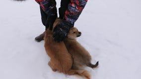 De mens streelt hond en puppy in de winter ijzige dag Hondenspel met hun meester op sneeuwweg De winter huisdieren stock video