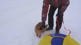 De mens streelt hond en puppy in de winter ijzige dag Hondenspel met hun meester op sneeuwweg De winter huisdieren stock footage