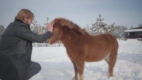 De mens strijkt snuit aanbiddelijke kleine poney bij boerderij dichte omhooggaand Concept het paardfokken Langzame Motie stock video