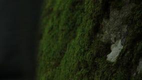 De mens trekt hand op mos stock video