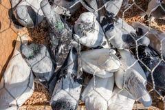 de mens verkoopt levende duiven die bij kooi bij Duifbazaar worden gehouden stock afbeeldingen