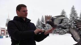 De mens voedt duiven met zijn palm stock footage