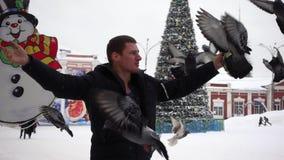 De mens voedt duiven, zitten de vogels op zijn handen stock footage