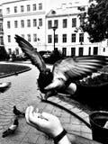 De mens voedt een duif in het park Stock Fotografie