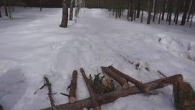 De mens werpt logboeken tijdens de voorbereiding van brandhout voor de winter stock footage