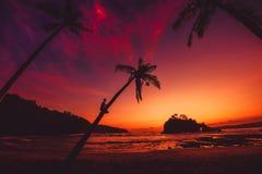 De mens zit op kokospalm en heldere zonsondergang of zonsopgang bij tropisch strand met oceaan stock afbeeldingen