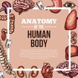 De menselijke affiche van de het lichaamsanatomie van de organen vectorschets Royalty-vrije Stock Afbeeldingen