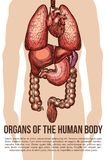 De menselijke affiche van de het systeem vectorschets van het organenlichaam Stock Afbeeldingen