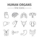 De menselijke geplaatste pictogrammen van de organenlijn Royalty-vrije Stock Foto