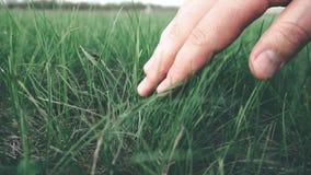 De menselijke hand houdt op groene gras dichte omhooggaand stock footage