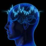De menselijke hersenen Stock Fotografie