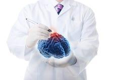 De menselijke hersenen Stock Foto's