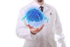 De menselijke hersenen Stock Afbeeldingen