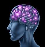 De menselijke Intelligentie van Hersenen Stock Foto's