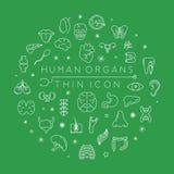 De menselijke organen verdunnen pictogrammen Royalty-vrije Stock Foto's
