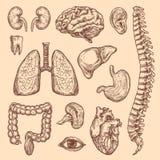 De menselijke pictogrammen van de het lichaamsanatomie van de organen vectorschets Stock Afbeeldingen