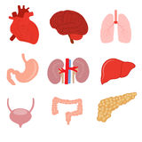 De menselijke reeks van de orgaananatomie Royalty-vrije Illustratie