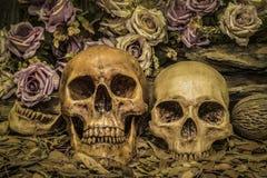 De menselijke schedel van het stillevenpaar met rozen Stock Fotografie