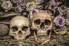 De menselijke schedel van het stillevenpaar met rozen Stock Afbeeldingen